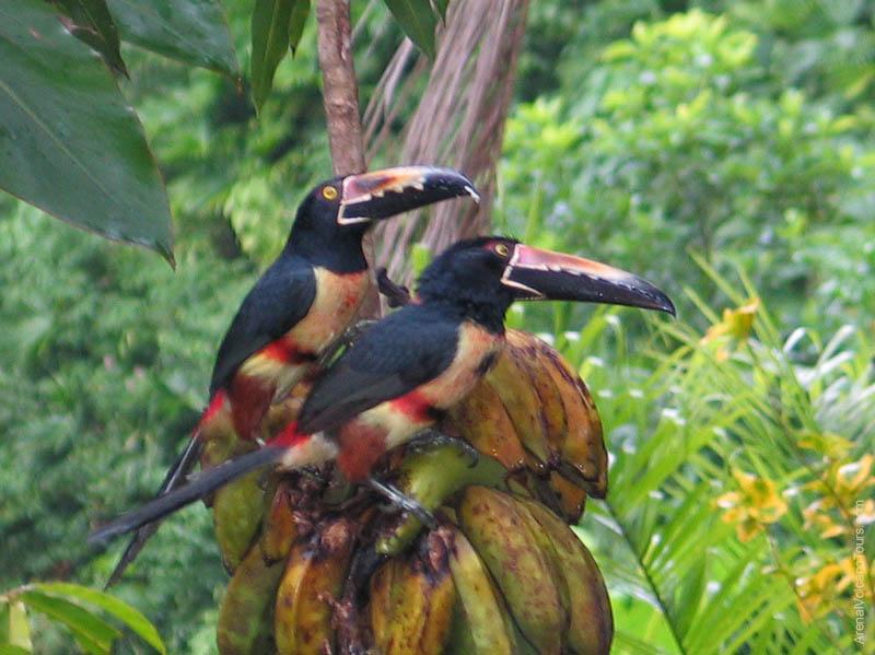 Monteverde Cloud Forest Costa Rica Shuttle Amp Tours